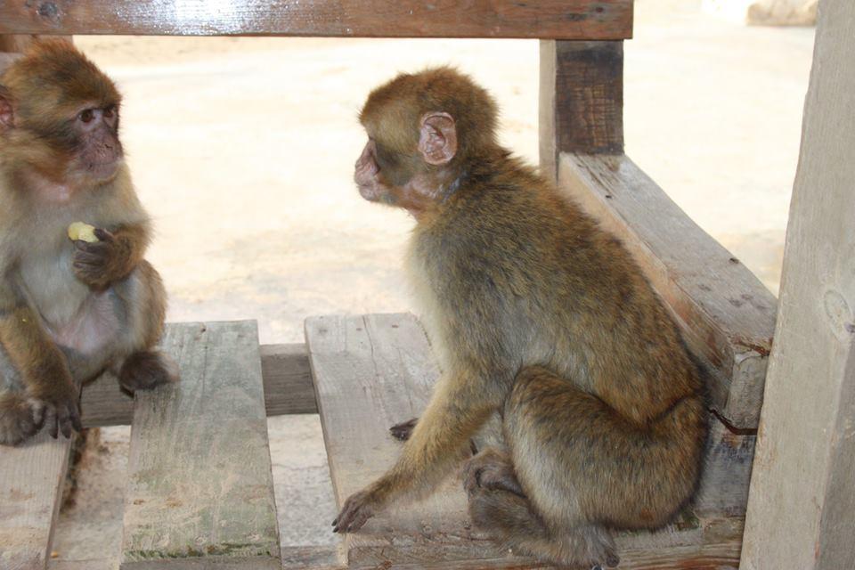zoo in tunisia di #viaggiareapois