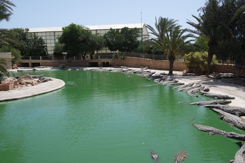 crocodile djerba explora