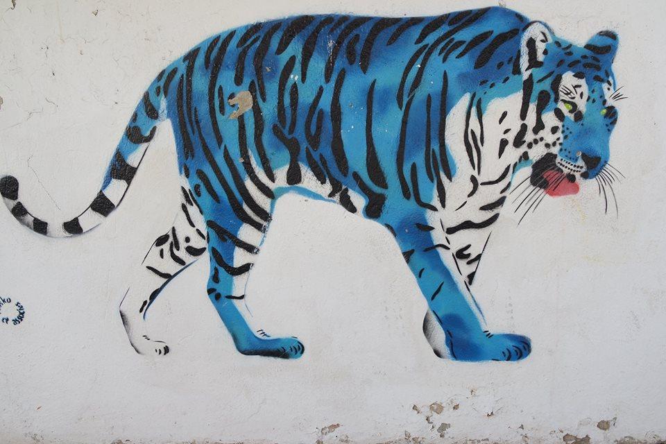 ghepardo djerba hood #viaggiareapois